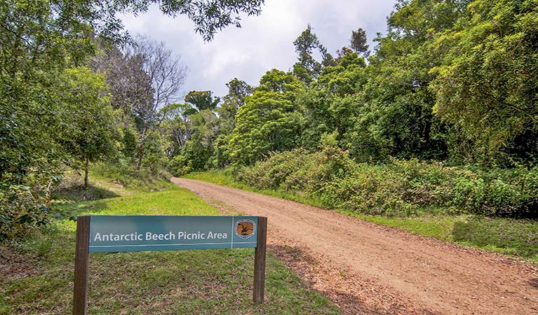 Antarctic Beech picnic area - ACT Tourism