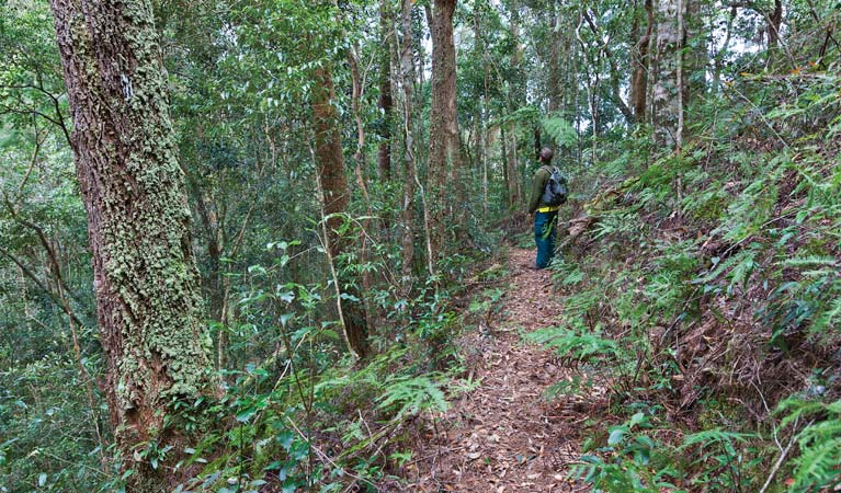 Blackbutt walking track - ACT Tourism