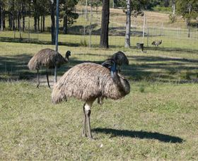 Glen Ian Ostrich and Emu Farm - ACT Tourism