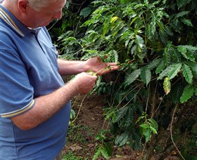 Wombah Coffee Plantation - ACT Tourism