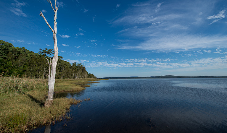 Lake Innes Nature Reserve - ACT Tourism