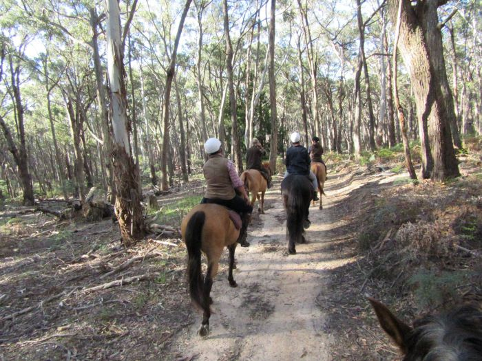 Silver Brumby Trails - ACT Tourism