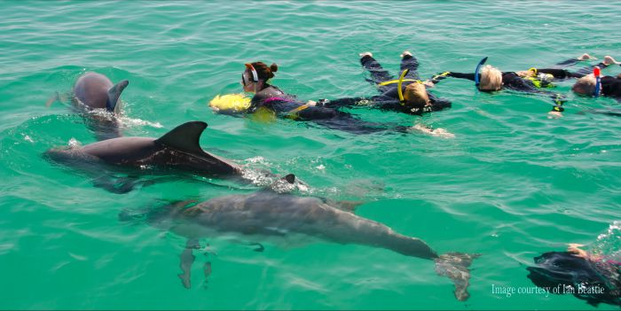Rockingham Wild Encounters - Swim with Wild Dolphins - ACT Tourism