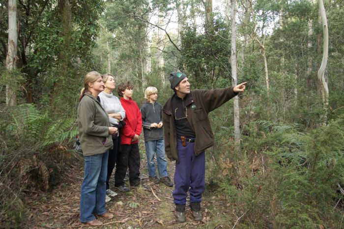 Great Western Tiers Forest Walks Tasmania - ACT Tourism