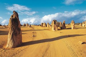 Pinnacles Desert Koalas and Sandboarding 4WD Day Tour from Perth - ACT Tourism
