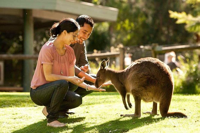 Very Best of Perth Tour - Wildlife Park  City Highlights Tour - ACT Tourism