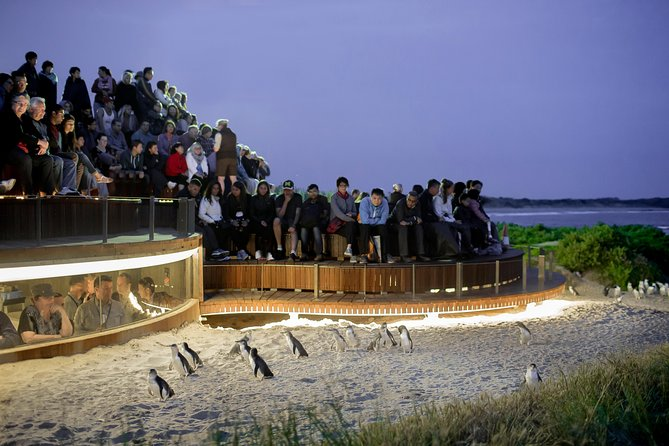 1 Day Private Phillip Island Tour VIP Charter up to 9 People - ACT Tourism