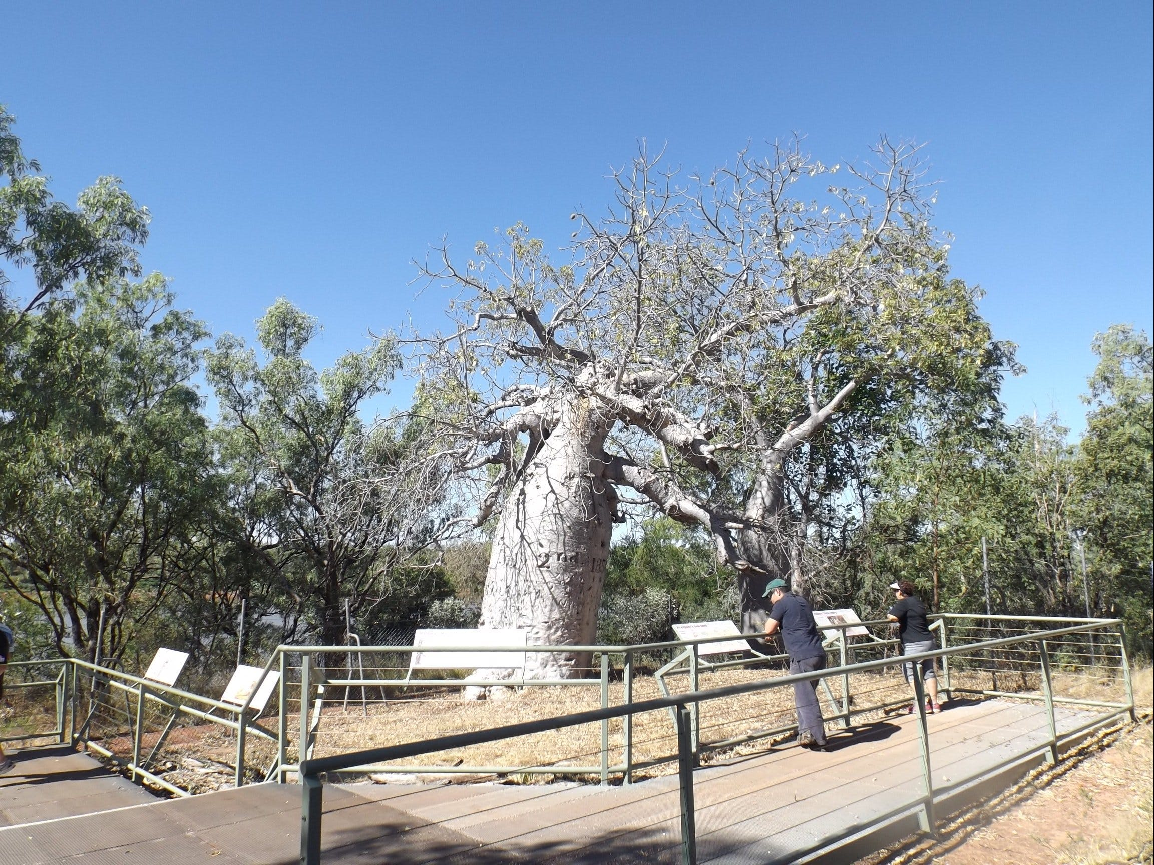 Gregory's Tree Timber Creek - ACT Tourism