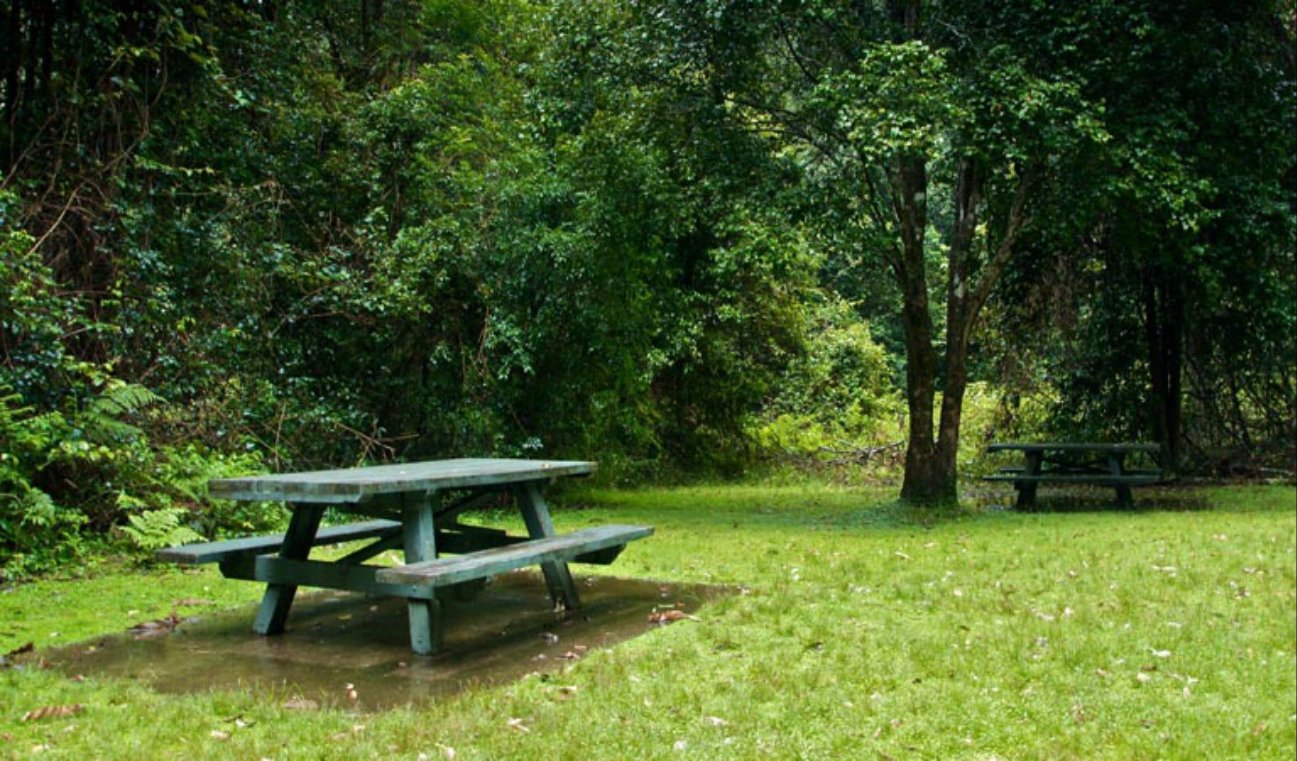 Williams River picnic area - ACT Tourism