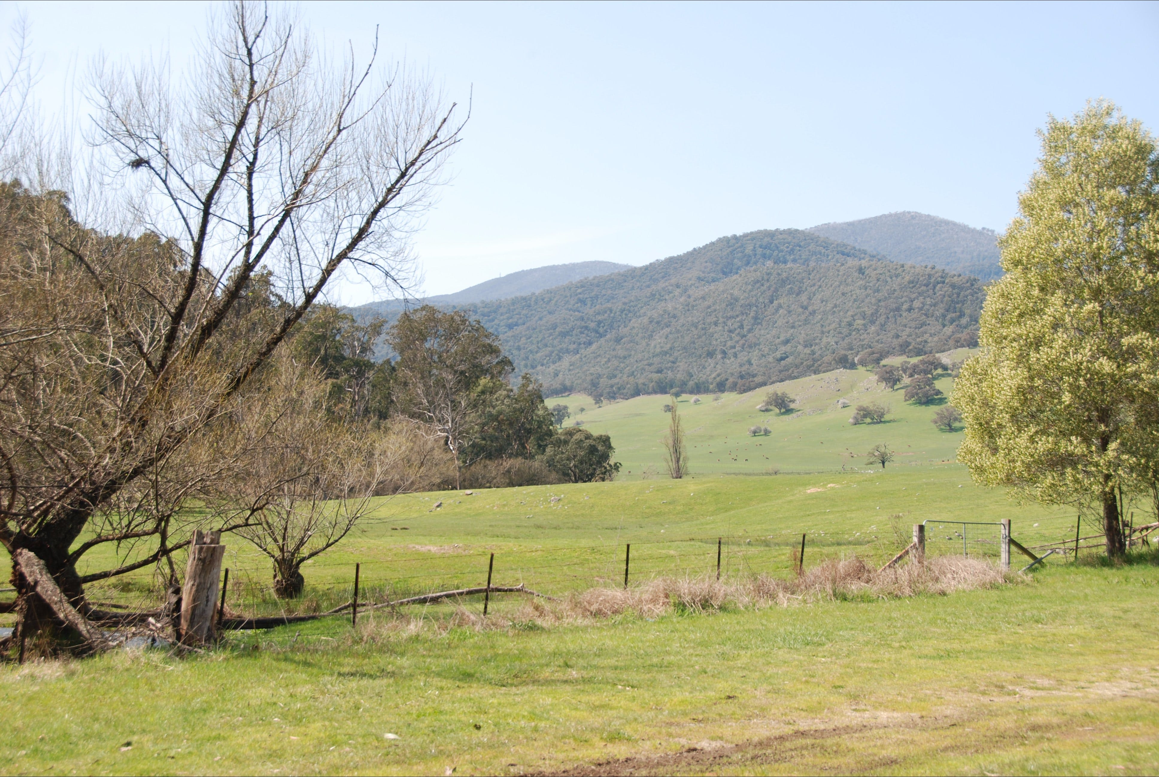 Banimboola Creek Rest Area - ACT Tourism