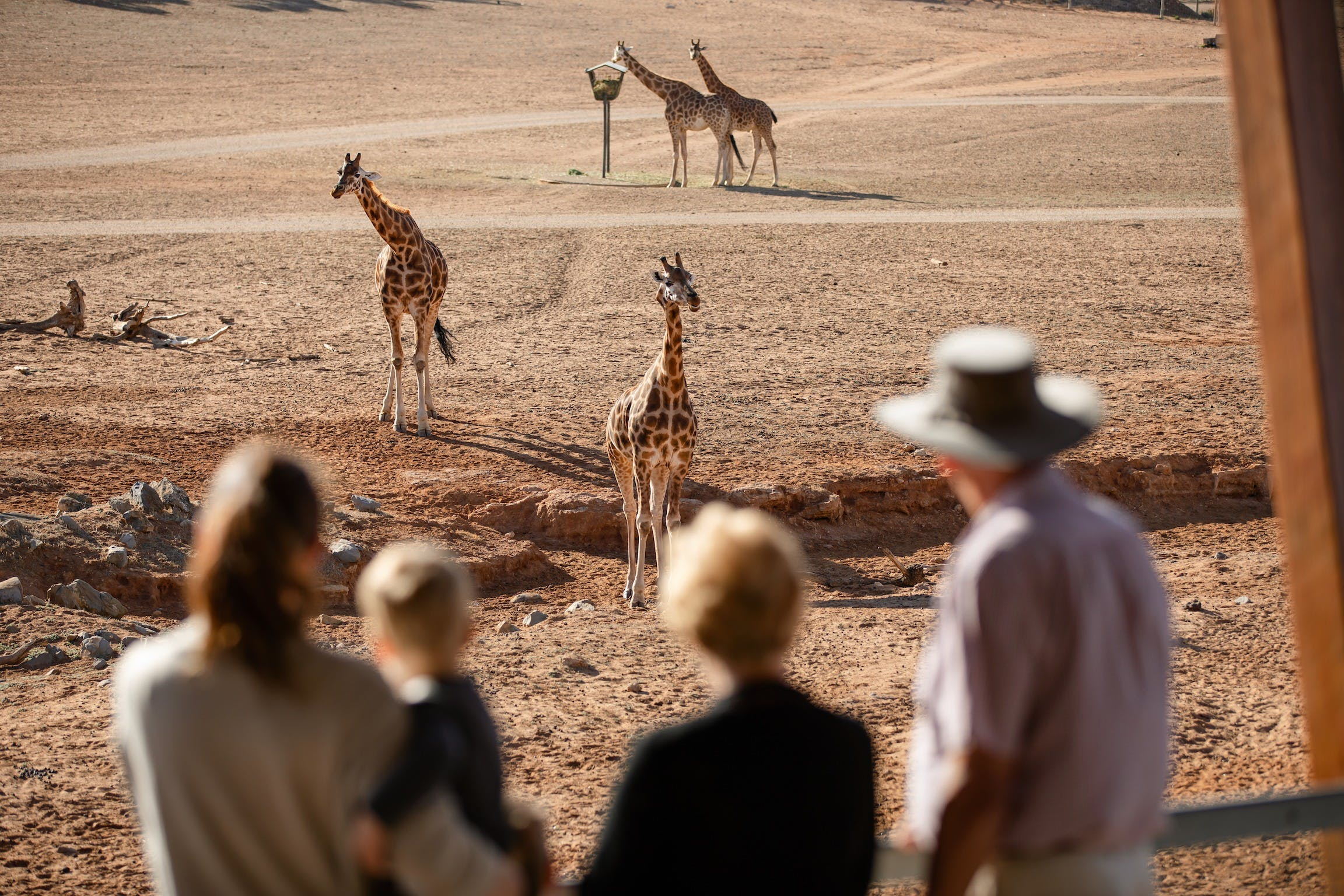 Monarto Safari Park - ACT Tourism