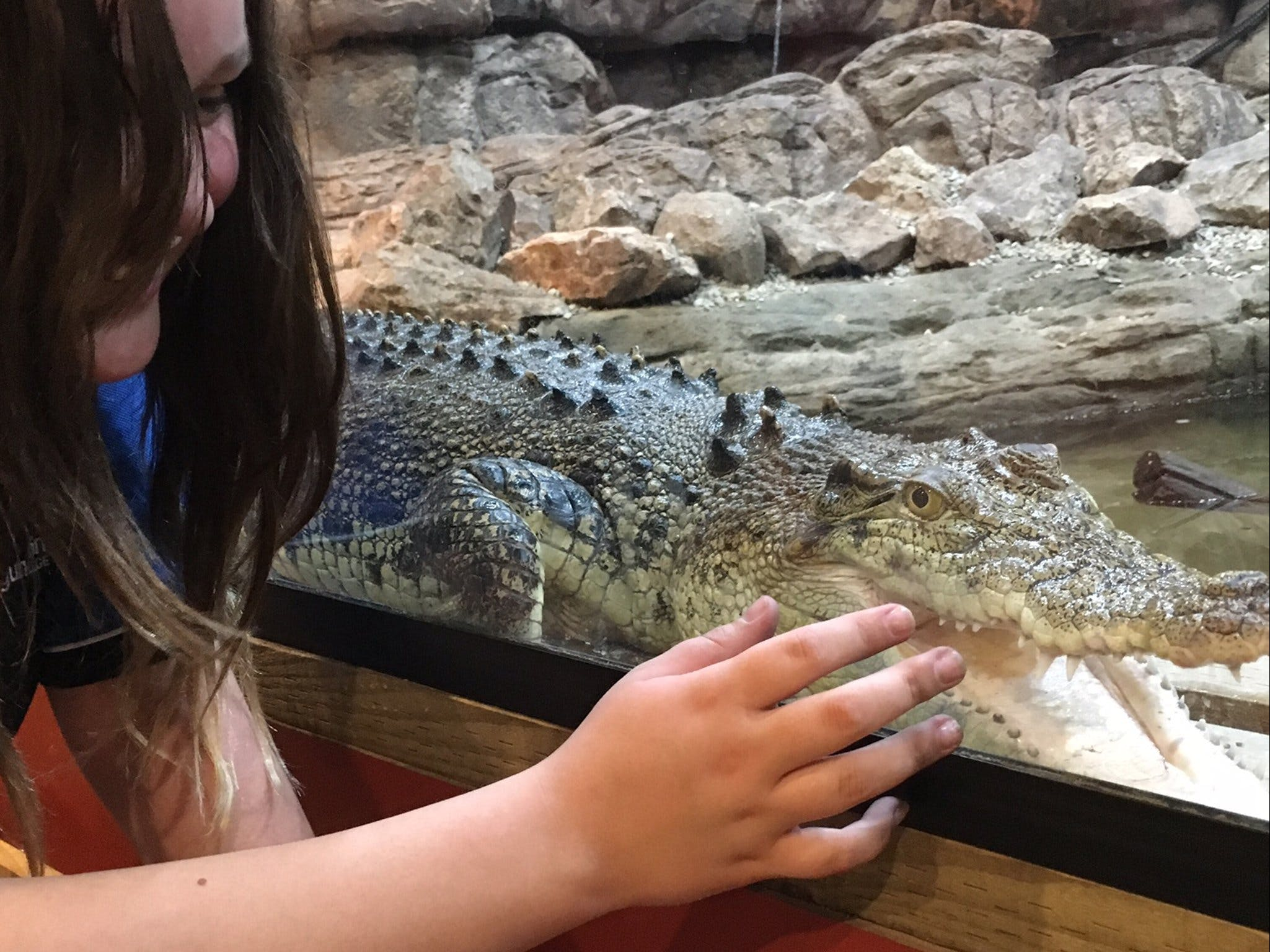Canberra Reptile Zoo - ACT Tourism