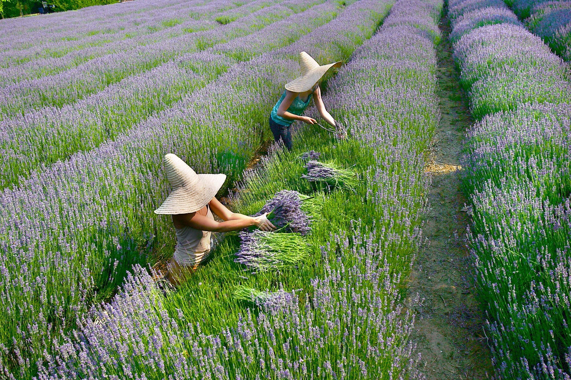 Lavandula Swiss Italian Farm - ACT Tourism
