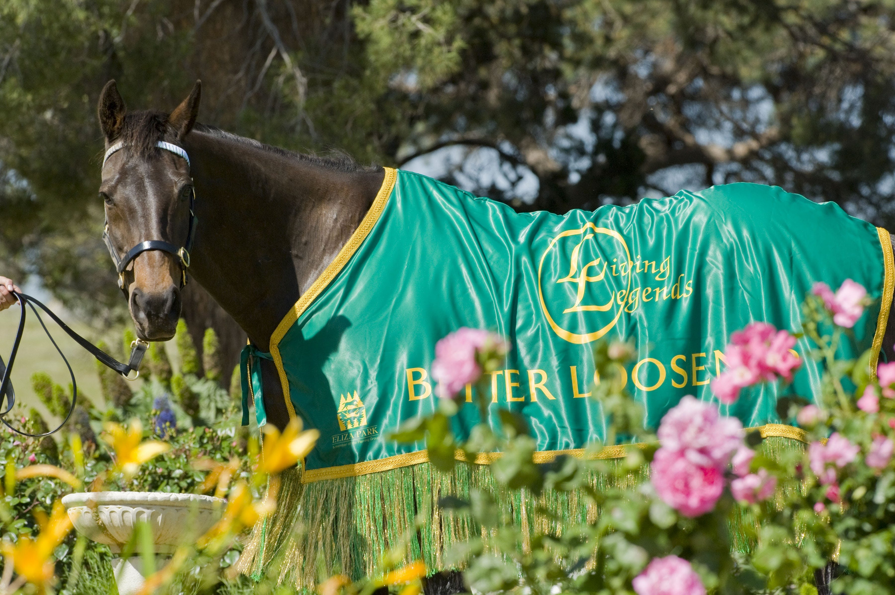 Living Legends The International Home of Rest for Champion Horses - ACT Tourism