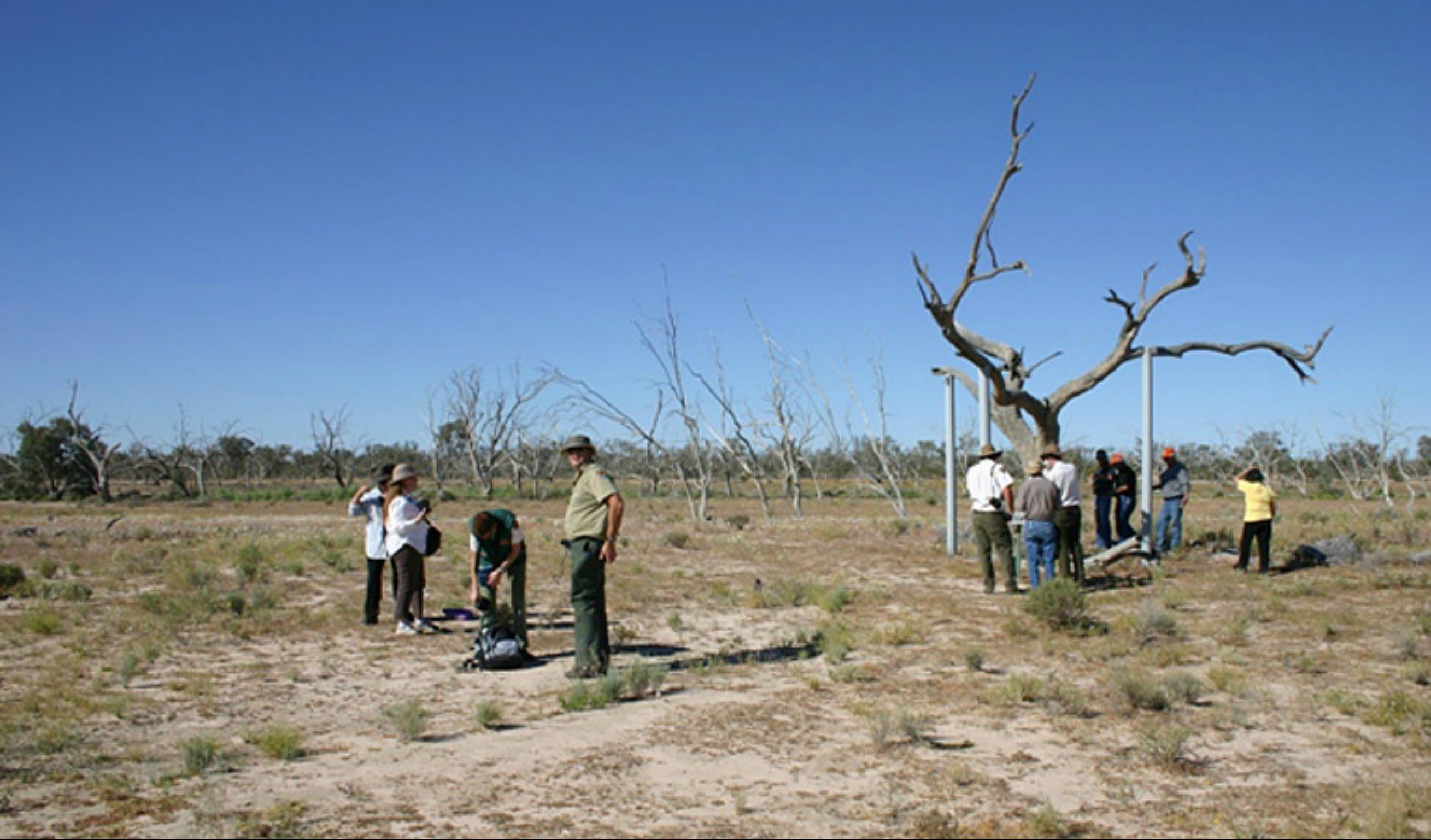 Sturt's tree walk - ACT Tourism