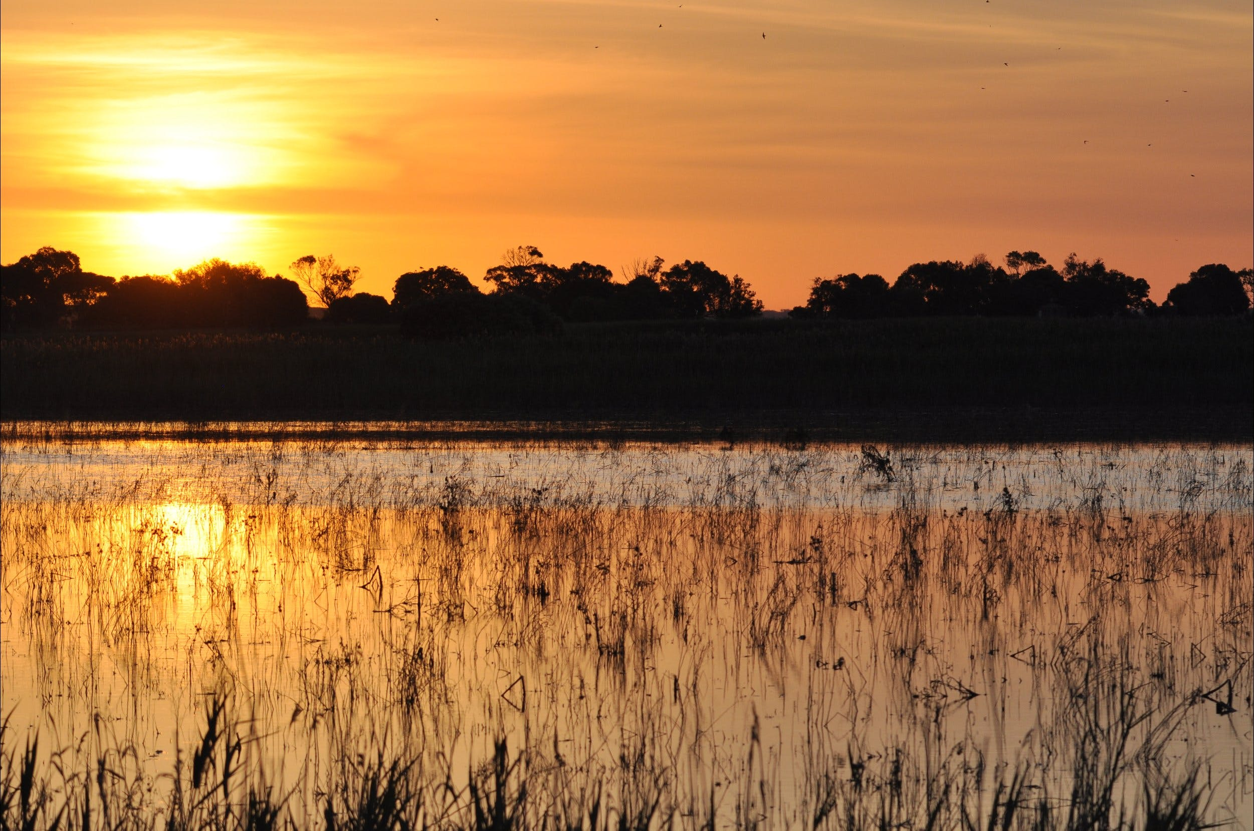 Bool Lagoon Game Reserve and Hacks Lagoon Conservation Park - ACT Tourism