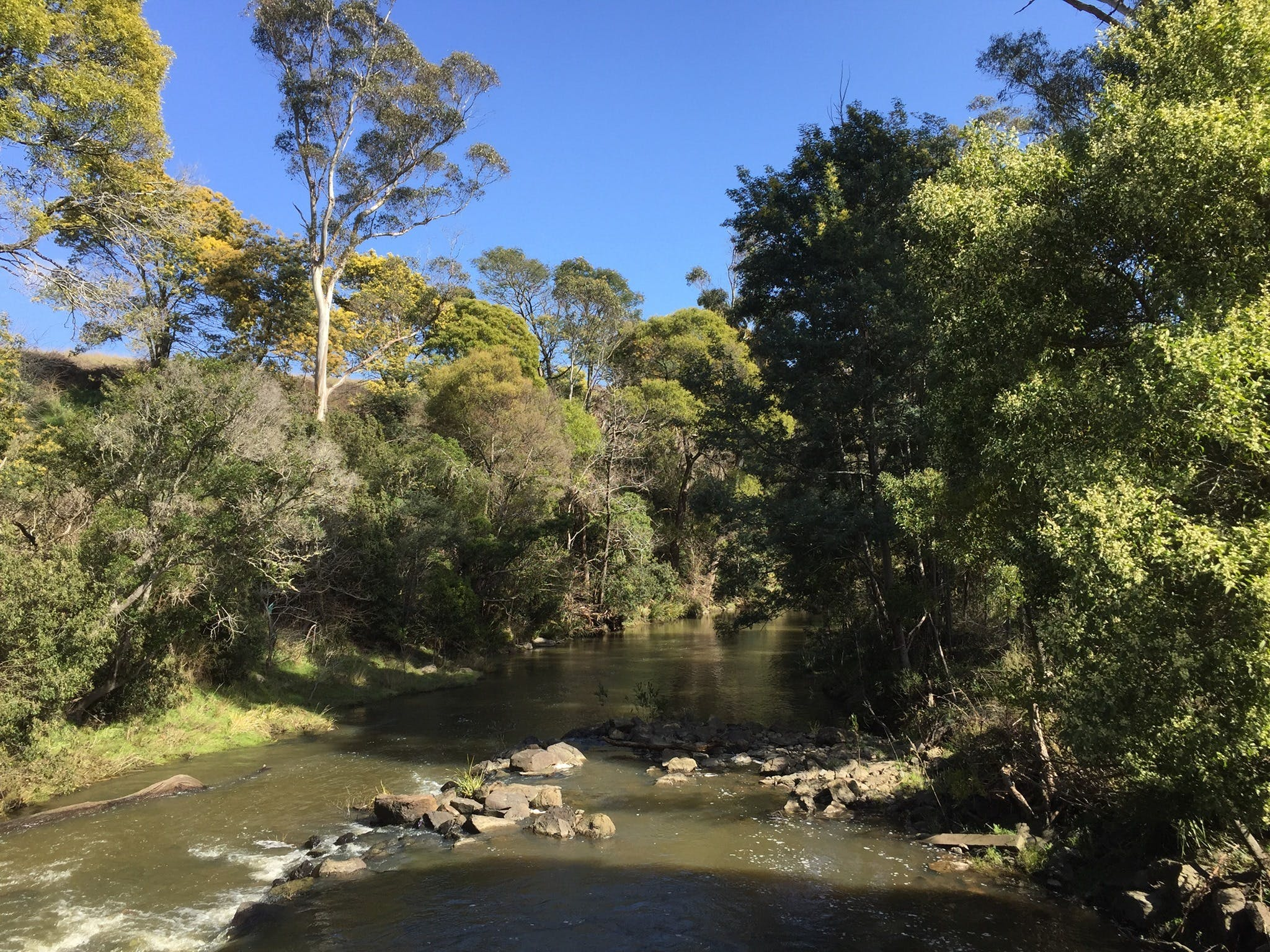 Pipers River Board Walk - ACT Tourism