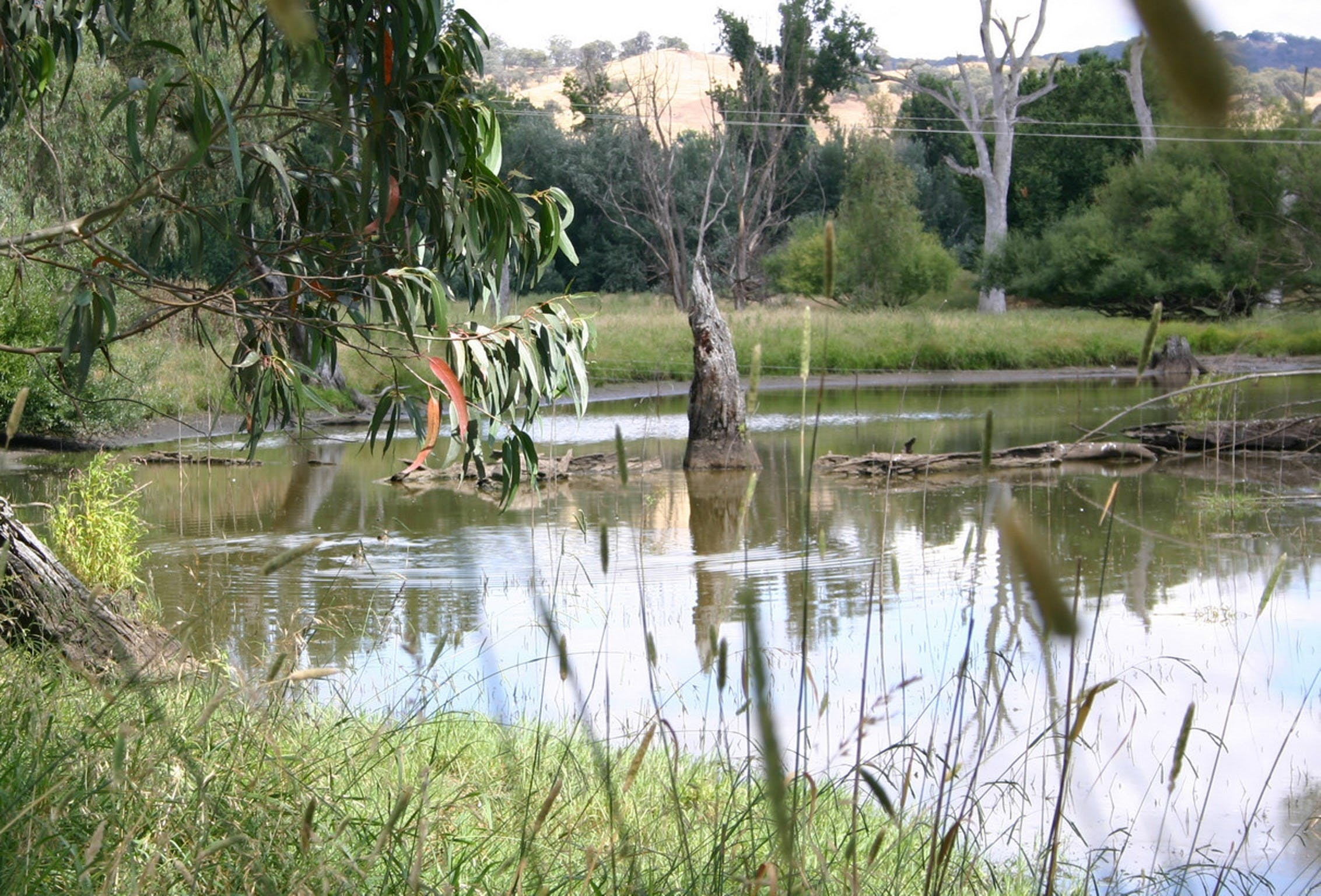 Tumut Wetlands - ACT Tourism