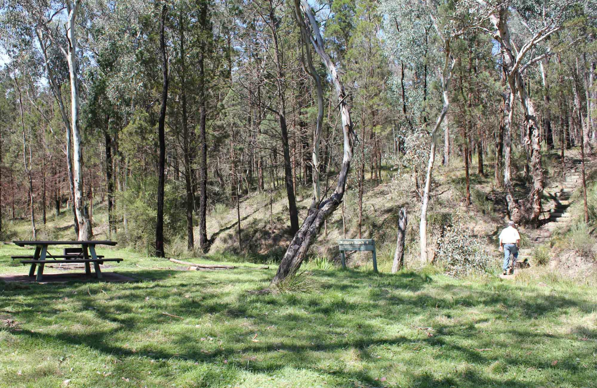 Wallaby Walking Track - ACT Tourism