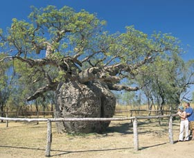 Boab Prison Tree - ACT Tourism