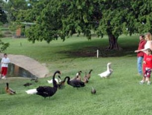 Anzac Park and Ululah Lagoon - ACT Tourism
