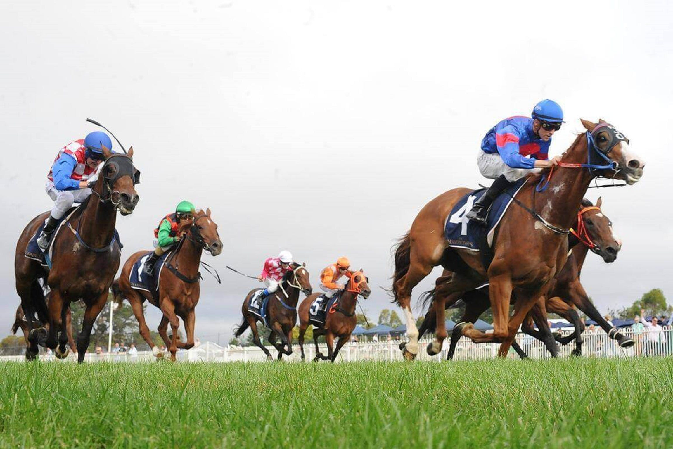 Christmas Cup Race Day - ACT Tourism