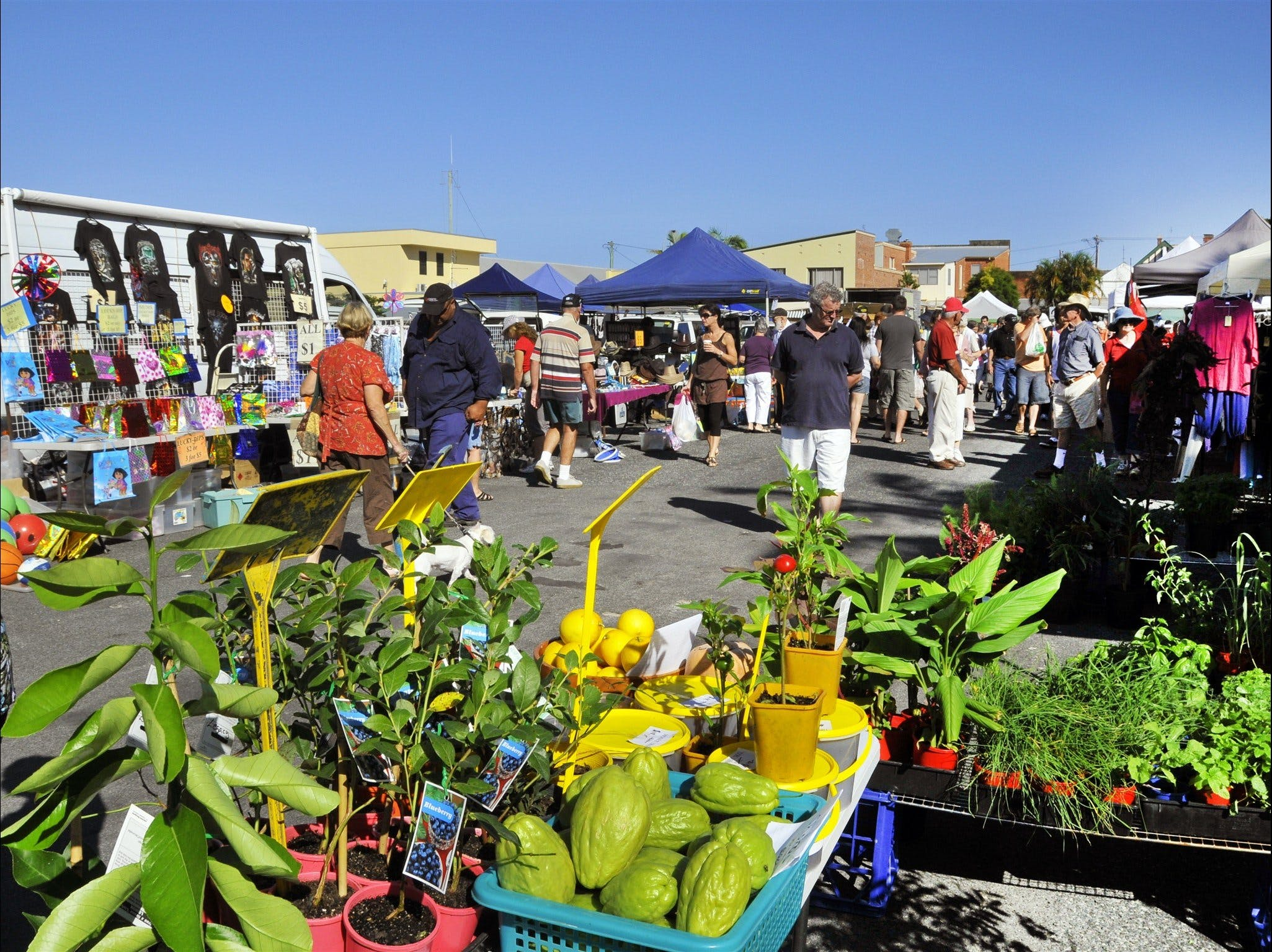Maclean Community Monthly Markets - ACT Tourism
