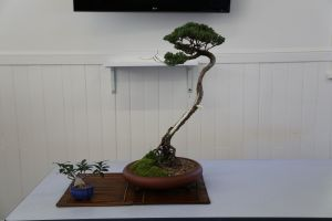 Wauchope Bonsai Workshop Group - ACT Tourism