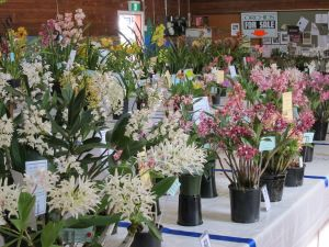 Sapphire Coast Orchid Club Spring Orchid Show - ACT Tourism