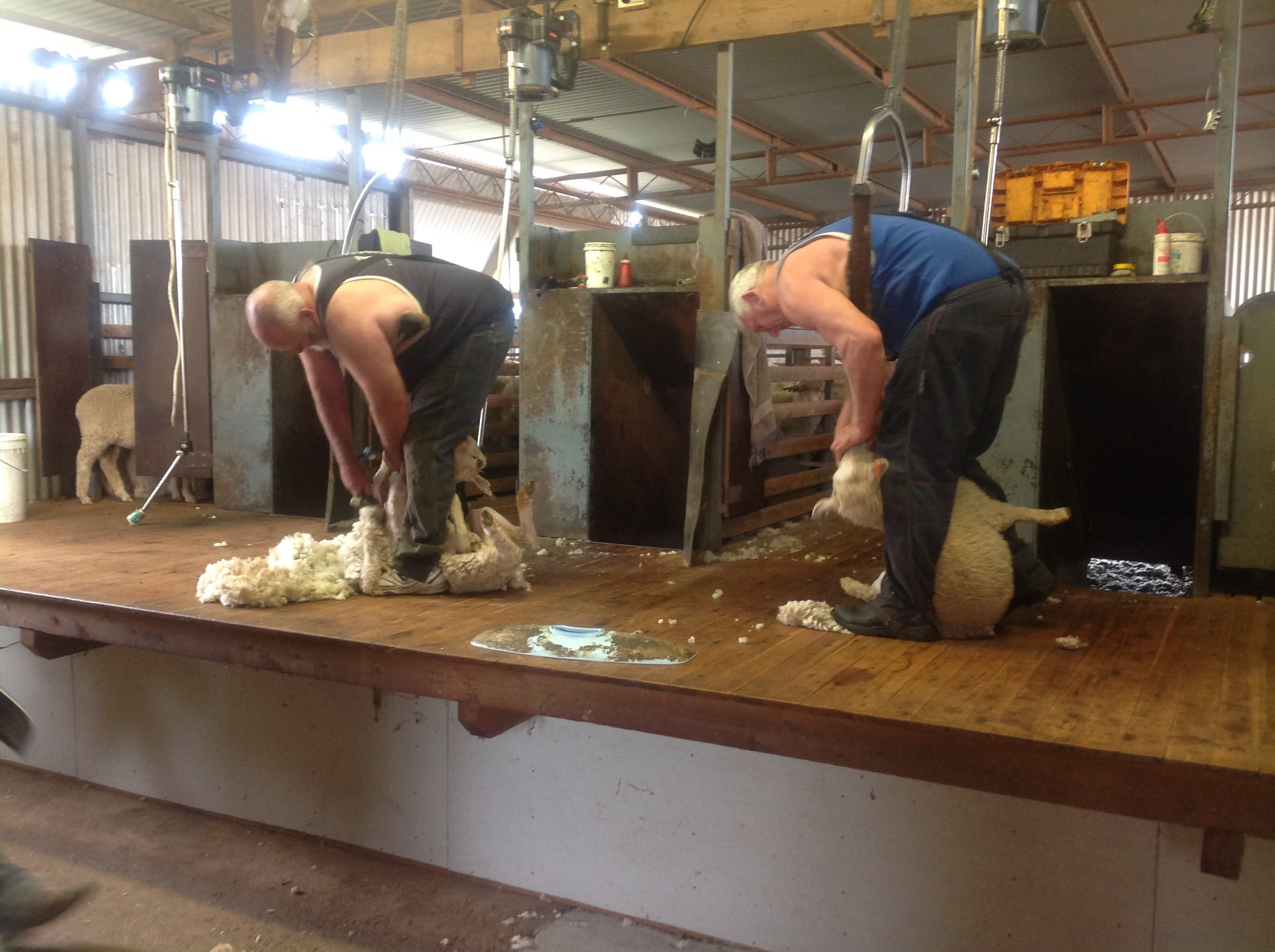 Sheep Shearing Farm Tour - ACT Tourism