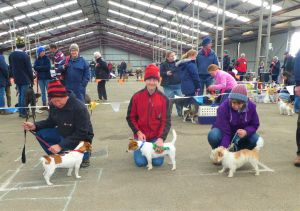 Hamilton Jack Russell Terrier and Hunting Dog Show - ACT Tourism