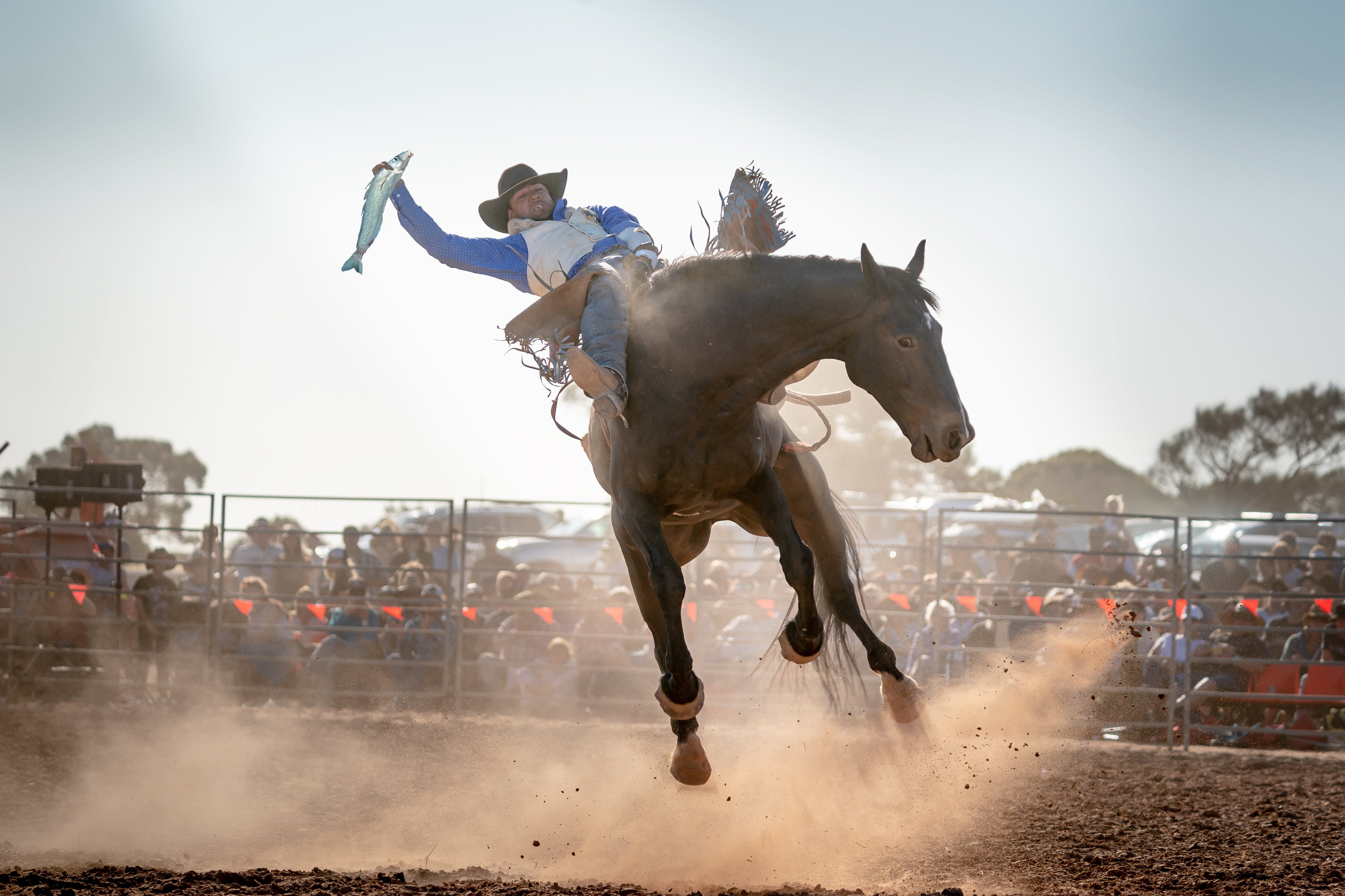 Rodeo by the Sea - Streaky Bay - ACT Tourism