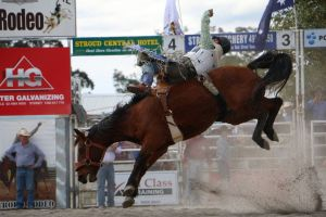 Stroud Rodeo and Campdraft - ACT Tourism
